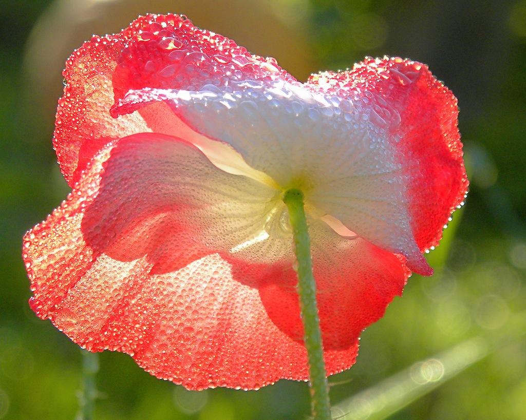 Прекрасный цветок для прекрасных Леди